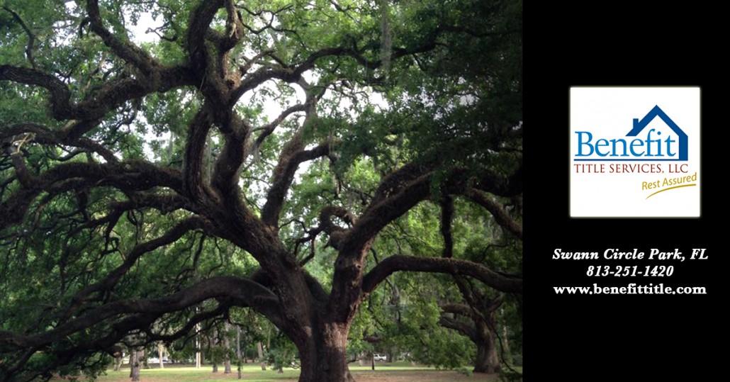 Beach Park Swann Circle Tree Benefit Title